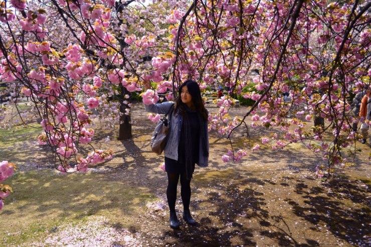 Shinjuku Park - Cherry blossom season.