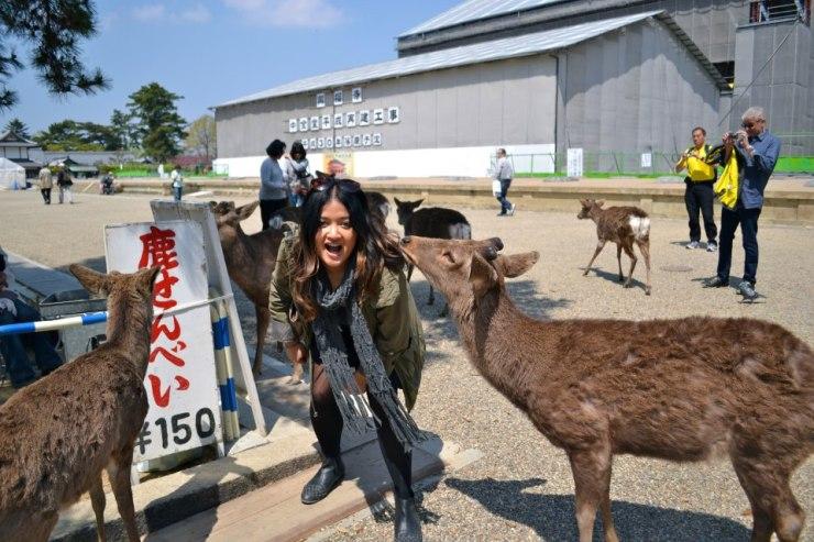 Deer Park in Nara
