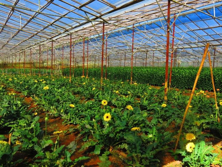 Flower Plantation.